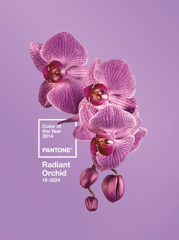 Pantone, radiant orchid