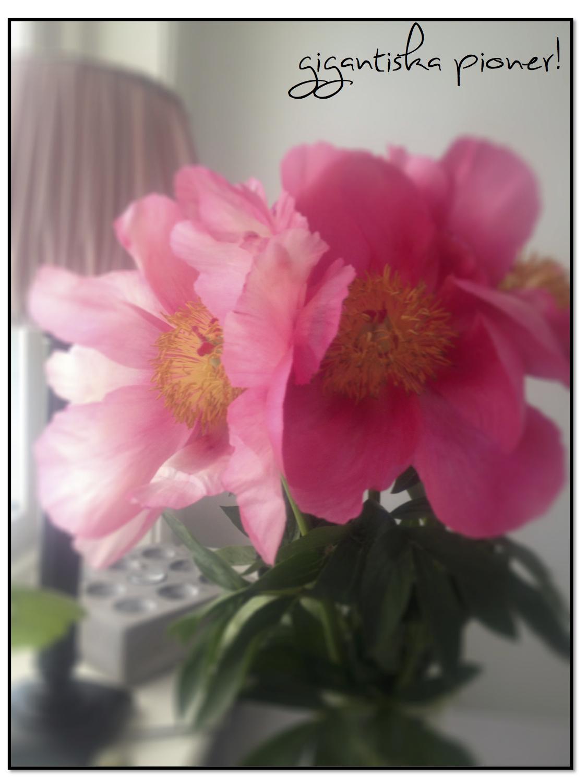 blommor6