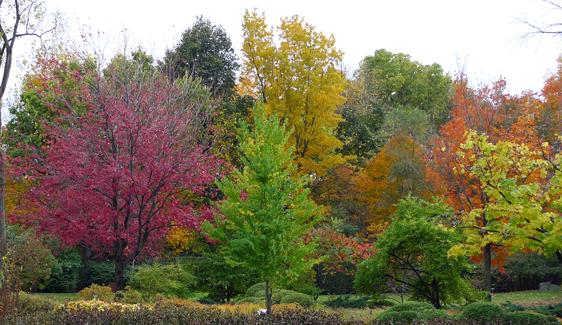 De botaniska trädgårdarna är ett bra ställe att se höstfärgerna utan att lämna stan.