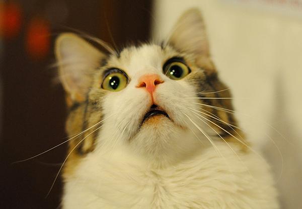 cat_1-jpg