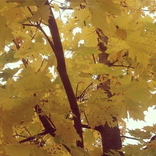 Skärmavbild 2014-10-24 kl. 19.16.14