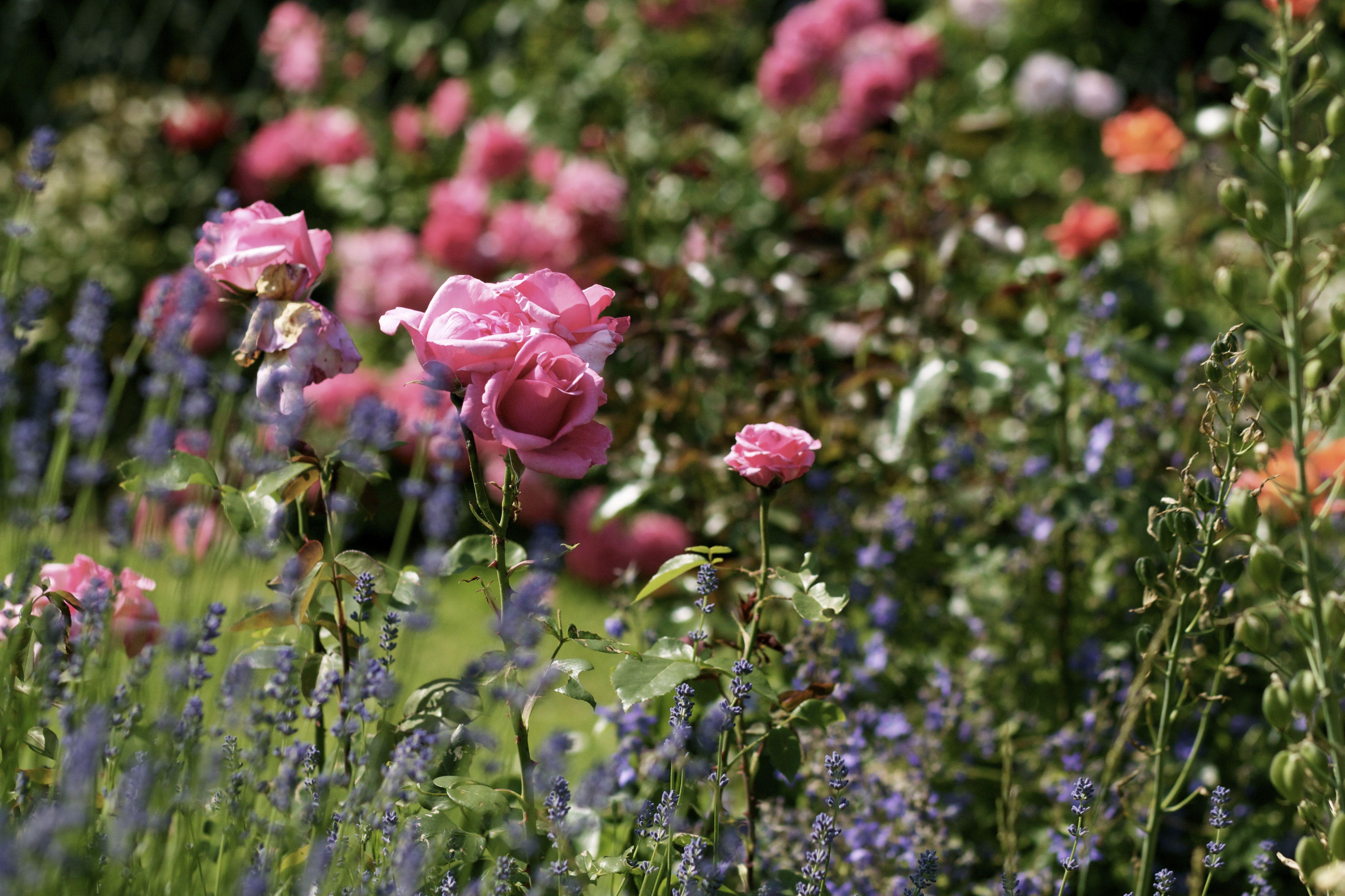 gärtenderwelt