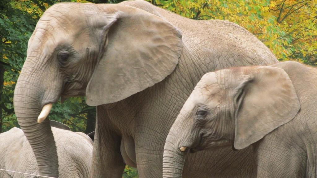 elephant-947592_1280