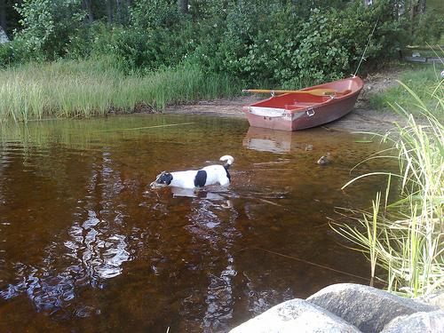 Hunden får man på köpet men det är nog för kallt för att bada