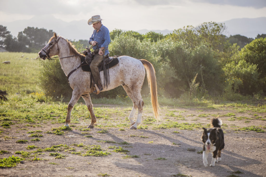 Western Horse Trails Mallorca, Mallorca Barnguide