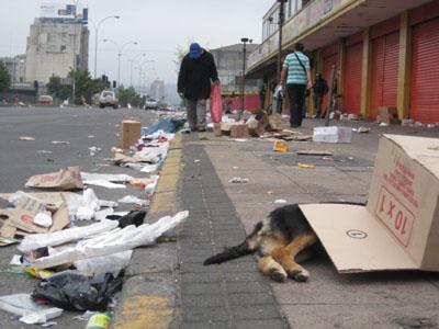 död hund.JPG