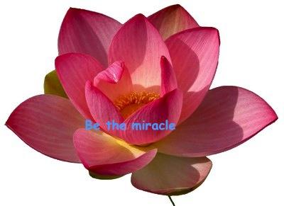 lotusblomma3_132968731